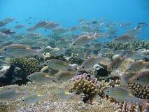 Tropische vissen en koralen Royalty-vrije Stock Fotografie