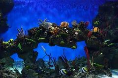 Tropische vissen en koralen in aquarium Stock Afbeeldingen