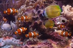 Tropische vissen en zeester Stock Foto