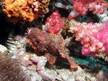 Tropische vissen in koraalrif stock fotografie