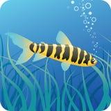 Tropische vissen onder water vector illustratie