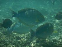 Tropische Vissen royalty-vrije stock afbeelding