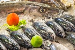 Tropische Vissen op Ijs bij de Markt - Thailand Royalty-vrije Stock Afbeelding