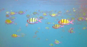 Tropische vissen in overzees Royalty-vrije Stock Afbeelding