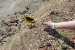 Tropische vissen. Rode overzees. royalty-vrije stock fotografie