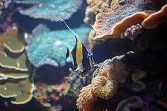 Tropische vissen tegen koraal   Royalty-vrije Stock Fotografie