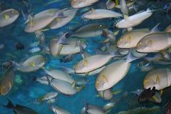 Tropische vissen, Thailand. Stock Foto's