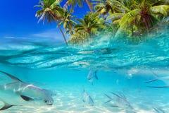 Tropische vissen van Caraïbische Zee Royalty-vrije Stock Foto