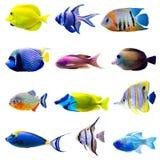 Tropische visseninzameling Stock Foto's