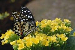 Tropische vlinder stock fotografie