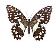Tropische vlinder Stock Foto's