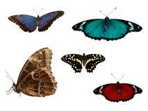 Tropische vlinders Royalty-vrije Stock Afbeeldingen