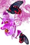 Tropische vlinders Stock Afbeelding