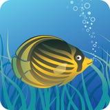 Tropische vlindervissen onder water stock illustratie