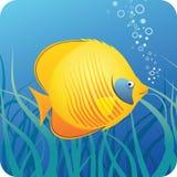 Tropische vlindervissen onder water royalty-vrije illustratie
