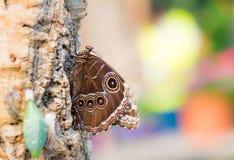 Tropische vlinderzitting op een boomboomstam Stock Afbeelding