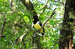 Tropische vogel. Stock Foto