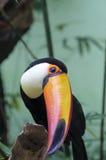 Tropische Vogel Stock Foto