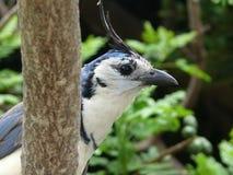 Tropische vogel Royalty-vrije Stock Fotografie