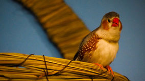 Tropische Vogel Royalty-vrije Stock Foto's