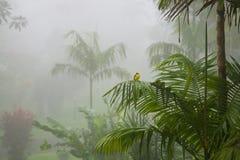 Tropische Vogel in Costa Rican Jungle royalty-vrije stock afbeeldingen