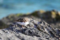 Tropische vogel op koraal royalty-vrije stock afbeeldingen