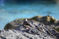 Tropische vogel op koraal stock foto's