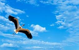 Tropische vogel over blauwe hemelachtergrond stock foto