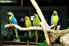 Tropische vogels Royalty-vrije Stock Foto's