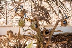 Tropische vogels in de Filippijnen Stock Foto