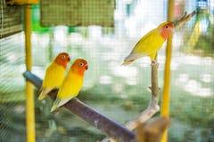 Tropische vogels in de Filippijnen Royalty-vrije Stock Foto's
