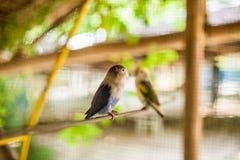 Tropische vogels in de Filippijnen Stock Fotografie