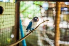 Tropische vogels in de Filippijnen Stock Afbeeldingen