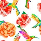 Tropische vogels en bloemen Naadloze patroonwaterverf Vector Camelia, kolibries rosa Stock Afbeelding