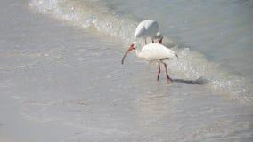 Tropische Vogels op strand Royalty-vrije Stock Afbeeldingen