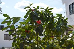 Tropische vruchten Stock Foto