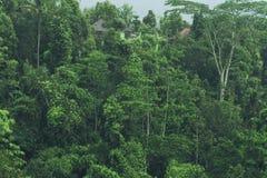 Tropische Waldansicht in asiatisches Land, grüne Naturbeschaffenheit, Dschungelansichthintergrund Lizenzfreies Stockfoto