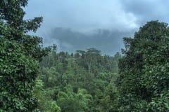 Tropische Waldansicht in asiatisches Land, grüne Naturbeschaffenheit, Dschungelansichthintergrund Lizenzfreie Stockfotos