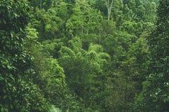Tropische Waldansicht in asiatisches Land, grüne Naturbeschaffenheit, Dschungelansichthintergrund Lizenzfreies Stockbild