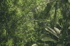 Tropische Waldansicht in asiatisches Land, grüne Naturbeschaffenheit, Dschungelansichthintergrund Stockfoto