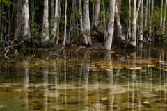 Tropische Waldreflexion im Wasser in Thailand im Winterzeitraum lizenzfreies stockfoto