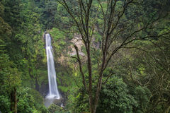 Tropische waterval Royalty-vrije Stock Foto