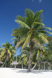 Tropische weiße Sande Strand, Palmen Stockbilder