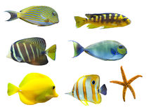 Tropische wereld van vissen Stock Foto