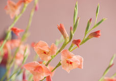 Tropische wilde Blume Stockfoto
