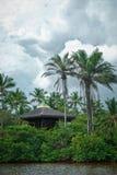 Tropische wildernis Royalty-vrije Stock Afbeelding