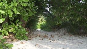 Tropische wildernis stock videobeelden
