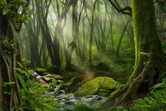 Tropische wildernis Royalty-vrije Stock Fotografie