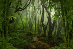 Tropische wildernis Stock Foto