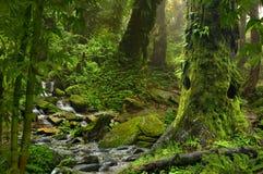 Tropische wildernis Royalty-vrije Stock Foto